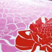 Prato-Rosa-porcelana_porm